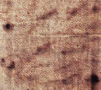From analysis of the marks of the flogging, it seems that the flagrum used was one in which the metal balls were slipped onto the lashes, and not tied perpendicularly. However the great number of marks visible, and their criss-crossing, makes this study particularly difficult. (8374 bytes)